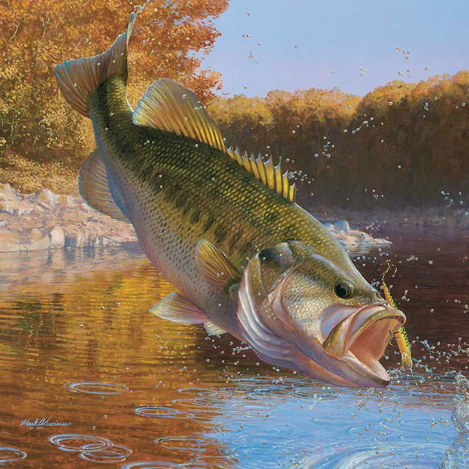 Lake Amistad Bass Fishing An Overview  Tips